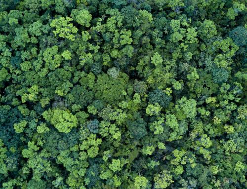 Объявляем грантовый конкурс об изменении климата для журналистов